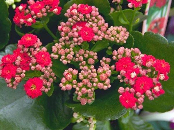 Cây hoa sống đời