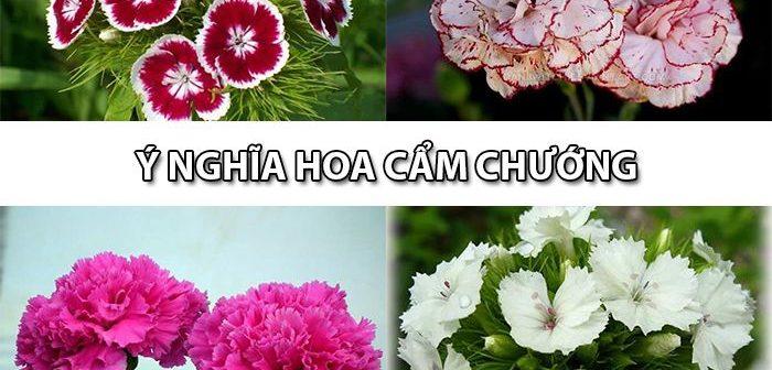 Bỏ túi ngay ý nghĩa hoa Cẩm Chướng – Shop hoa tươi Mrhoa