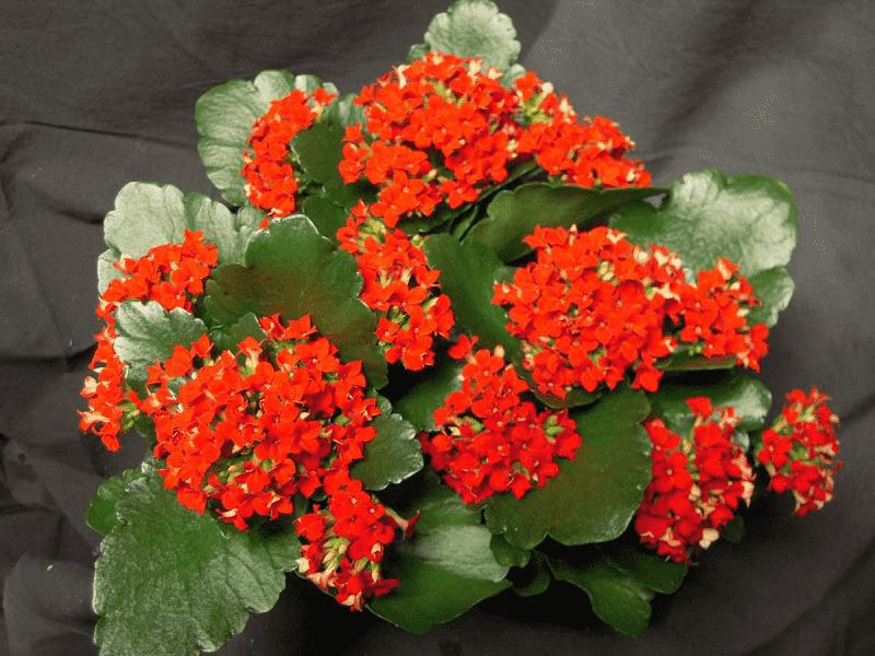 Vẻ đẹp của cây hoa bỏng