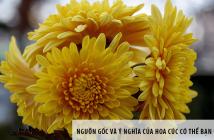 Nguồn gốc và ý nghĩa của hoa cúc có thể bạn chưa biết